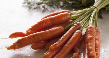Le Jardin des Gallines - Carottes Oranges 1kg