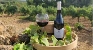 Domaine Miradels - AOC Corbières - Tradition Domaine Miradels 2017 - 3 bouteilles