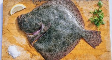 Côté Fish - Mon poisson direct pêcheurs - Turbot