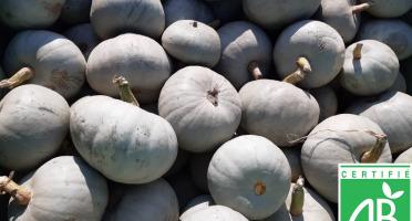 Le Châtaignier - Courges Bleu De Hongrie Bio - Colis 5 Kg