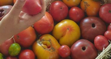 Le Cayre de Valjancelle - Bruno Cayron et Isé Crébely - Tomates anciennes en mélange - 11kg