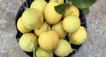 Le Jardin des Antipodes - Citron Femminello Frais Non-traités De Vintimille - 5kg