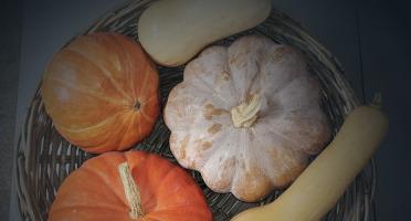 Les Jardins de Champlecy - Assortiment De Courges 10kg