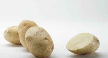 Maison Bayard - Pommes De Terre Artémis - 5kg