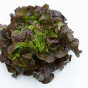 Le Jardin des Gallines - Salade Feuille De Chêne Rouge Bio