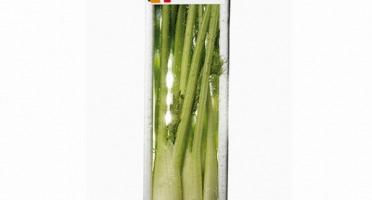Maison Sales - Végétaux d'Art Culinaire - -4- Mini Fenouil - 6 Pièces Minimum