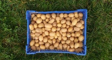 La Ferme Boréale - Pommes De Terre Agata Calibre 28-35 - 3kg