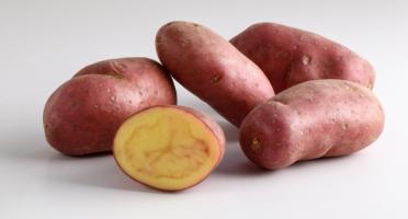 Maison Bayard - Pommes De Terre Roseval - 5kg