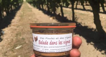 Des Poules et des Vignes à Bourgueil - Balade dans les vignes