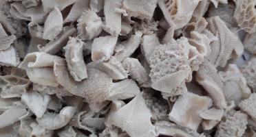 SCEA Champ du Puits - Tripes cuites Nature