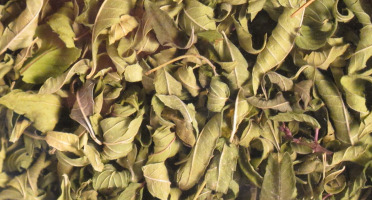 Les Jardins du Mas de Greil - Verveine-menthe, Tisane Composée