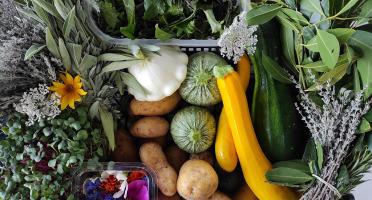 Les Jardins du Mas de Greil - Grand Panier de Légumes