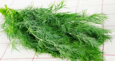 La Boite à Herbes - Aneth Fraîche - Sachet 200g