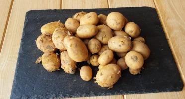 Gourmets de l'Ouest - Pommes de terres nouvelles de Saint-Malo