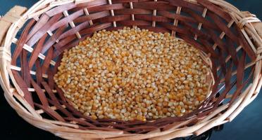Au bon Jardinet - Maïs À Pop Corn Variété Ancienne Tom Pouce  250g