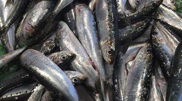 Poissonnerie Le Marlin - Sardines - 500g
