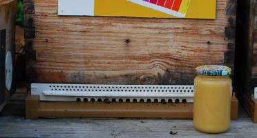 La Boite à Herbes - Miel De Camargue - 500g