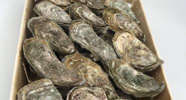 Buccimarée - Huître Creuse De Pleine Mer Naturelle N°3 - 2kg