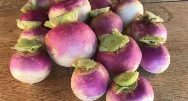 La Ferme du Polder Saint-Michel - Navet violet Bio 1kg