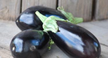 La Boite à Herbes - Aubergine Bio 1kg