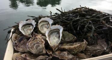 Les Huîtres Chaumard - Huîtres De Pleine Mer N°3 - 2x Bourriches De 100 Pièces