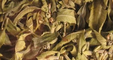 Les Jardins du Mas de Greil - Verveine-lavande, Tisane Composée