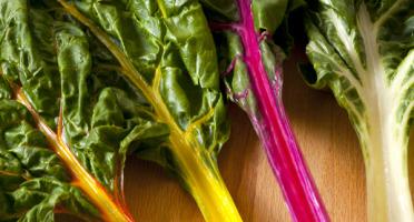 Le Jardin des Gallines - Blettes À Cardes Multicolores Bio