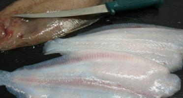 Pêcheries Les Brisants - Ulysse Marée - Filet De Cardine Double Peau - 400g