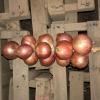 Maison Quéméner - Tresse D'oignons De Roscoff AOP - 1,2kg