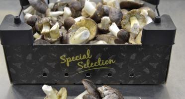 Trapon Champignons - Charbonniers 1kg