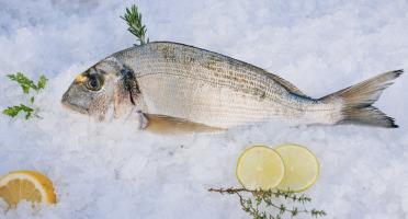 Côté Fish - Mon poisson direct pêcheurs - Daurades Royales 500g
