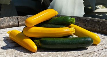 La Boite à Herbes - Courgettes Longues Panachés - 2kg
