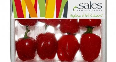 Maison Sales - Végétaux d'Art Culinaire - Mini Poivron Rouge - 8 Pièces