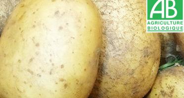 Mon Petit Producteur - Pomme De Terre Bio Polyvalente 25kg