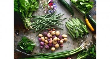 La Ferme d'Artaud - Panier de Légumes Gastronomiques