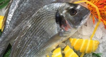 Poissonnerie Le Marlin - Dorade Royale- 1,2kg - Vidée