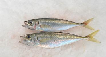 Côté Chic - Poisson frais de Méditerranée - Gascon (chinchard)