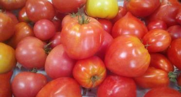Gourmets de l'Ouest - Tomates anciennes de Saint-Malo