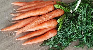 Gourmets de l'Ouest - Carottes nouvelles de Saint-Malo