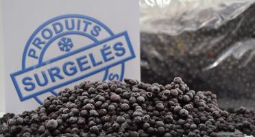 Trapon Champignons - Myrtilles Sauvages Surgelées 5kg