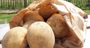 Le Châtaignier - Pomme de terre Colomba polyvalente - 2 Kg