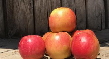 La Boite à Herbes - Pomme Akane bio nouvelle récolte - 3kg