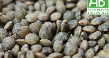 Mon Petit Producteur - Lentilles Vertes Bio [500g]