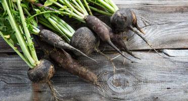 La Boite à Herbes - Radis Noir Bio - 1kg