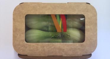 Maison Sales - Végétaux d'Art Culinaire - 23- Mini Fenouil Bulbe - 4 Pièces