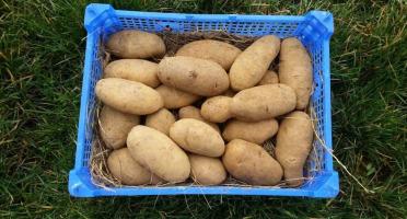 La Ferme Boréale - Pomme De Terre Spunta Calibre 55-75 - 5kg