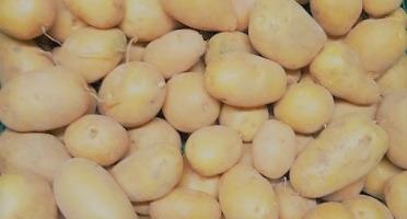 Les Jardins de Champlecy - Pomme De Terre 10 Kg