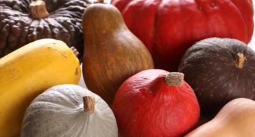 Le Jardin des Gallines - Lot de courges BIO en mélange de variétés vendues entières