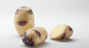 Maison Bayard - Pommes De Terre Blue Belle - 5kg