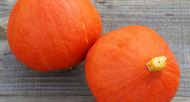 La Boite à Herbes - Potimarron Orange - 1 Pièce